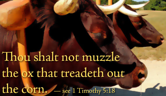 Thou shalt not muzzle the ox that treadeth out the corn. 1 Timothy 5:18